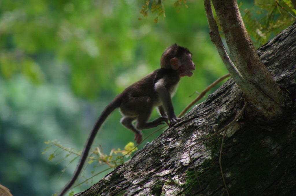 Penang George Town street art - Baby Monkey!
