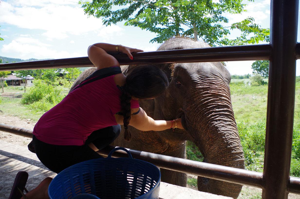 Lisa feeding Songkran her bananas