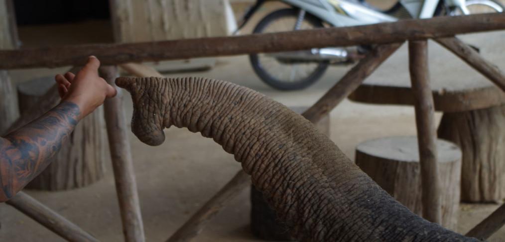 ElephantsWorld Kanchanaburi