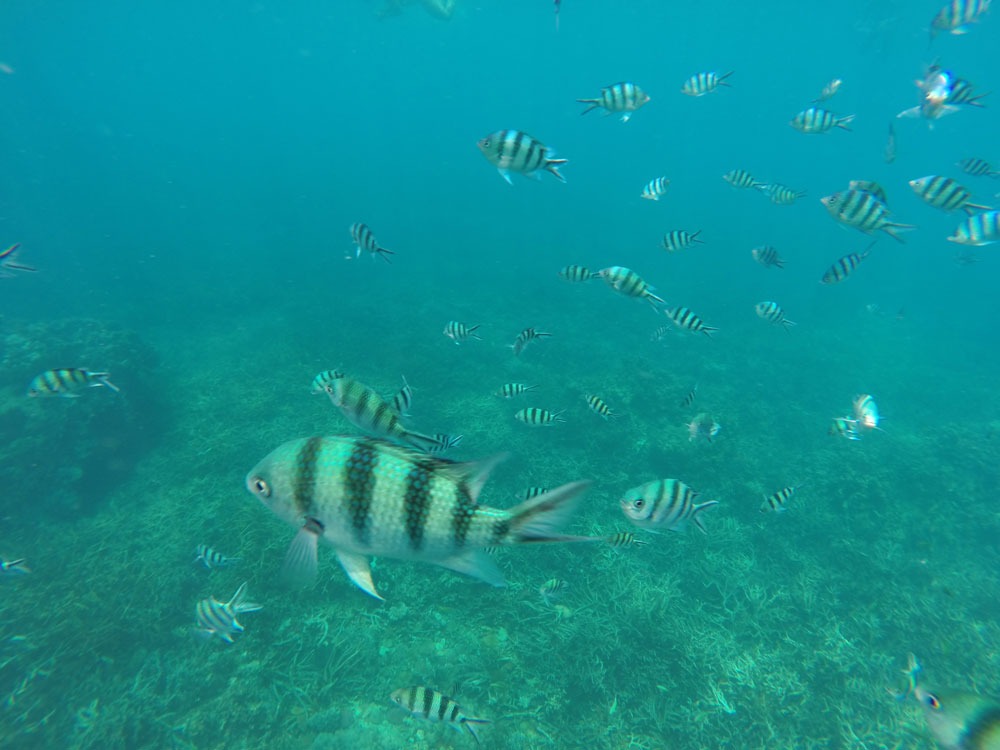 Koh Tao, Thailand Photo Essay - The snorkelling was amazing!
