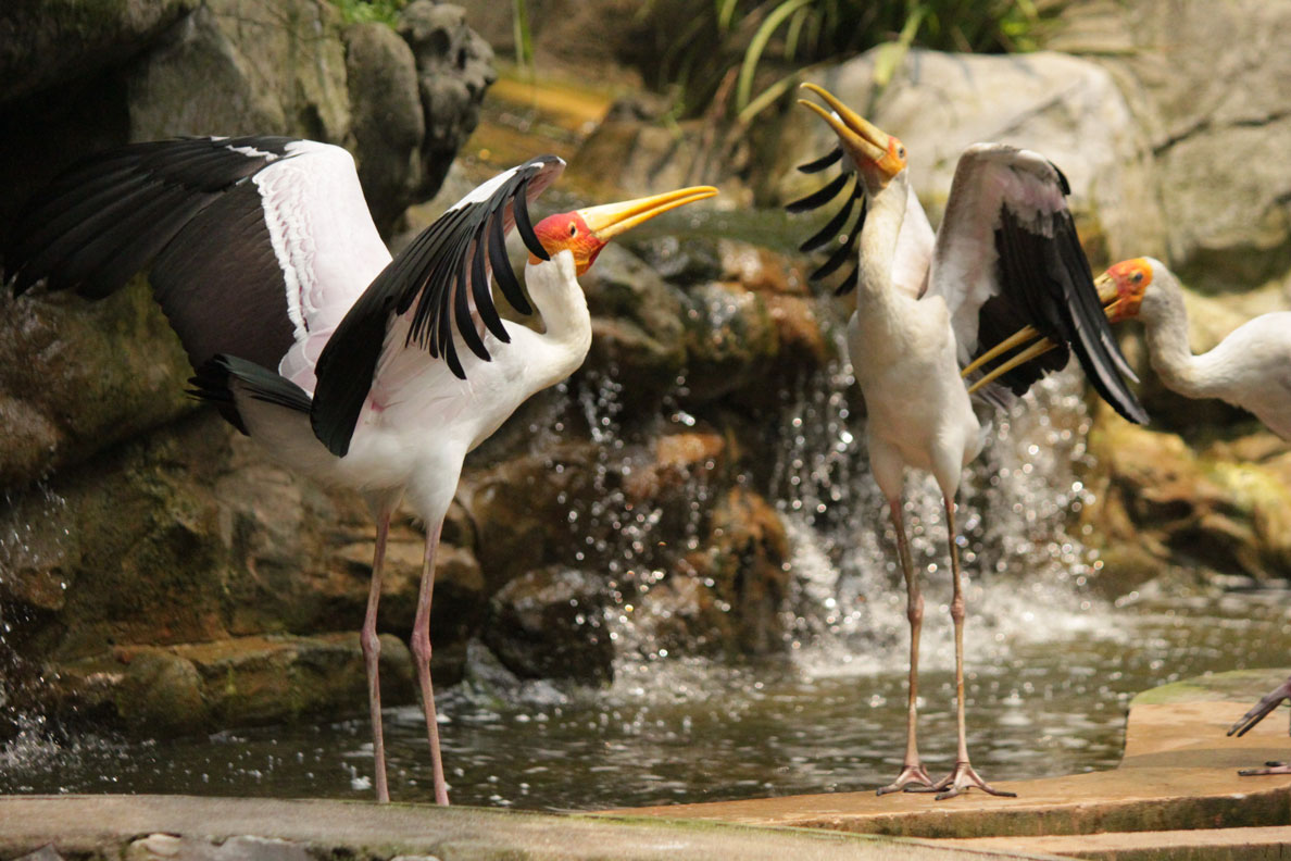 The Kuala Lumpur Bird Park is a fab day out. KL grandeur at its best