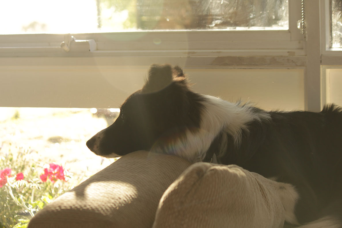 Photo Essay Pets from our Travels - She loved to watch TV too!