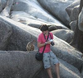 Mareeba Rock Wallabies Granite Gorge